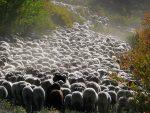 John Wayne Weddings, Sheep Herding and Mountain Town Adventures