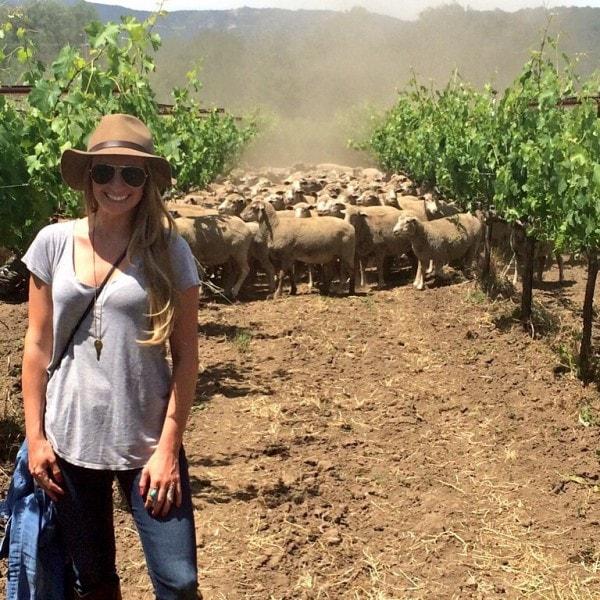 Whitney Bond on Vineyard with Sheep
